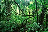 BNS Reptile Habitat, Terrarium Background, DEEP IN THE JUNGLE - Various Sizes (18''x36'')