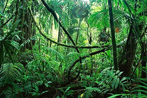 BNS Reptile Habitat, Terrarium Background, DEEP in The Jungle - Various Sizes (24''x85'') by BNS