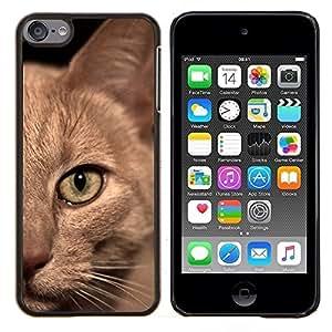 YiPhone /// Prima de resorte delgada de la cubierta del caso de Shell Armor - Gato birmano American Shorthair británico - Apple iPod Touch 6 6th Touch6