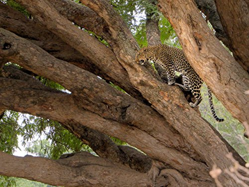 Extreme Habitats (Lake Manyara National Park)