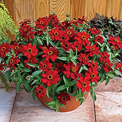 Park Seed Profusion Red Zinnia Seeds