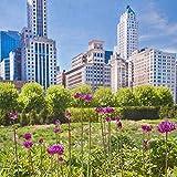 Chicago Millenium Park Botanical Photo with Skyline