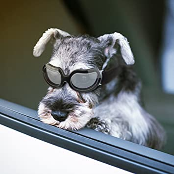 Gafas de Sol para Perro, Anteojos para Perros y Gatos con ...