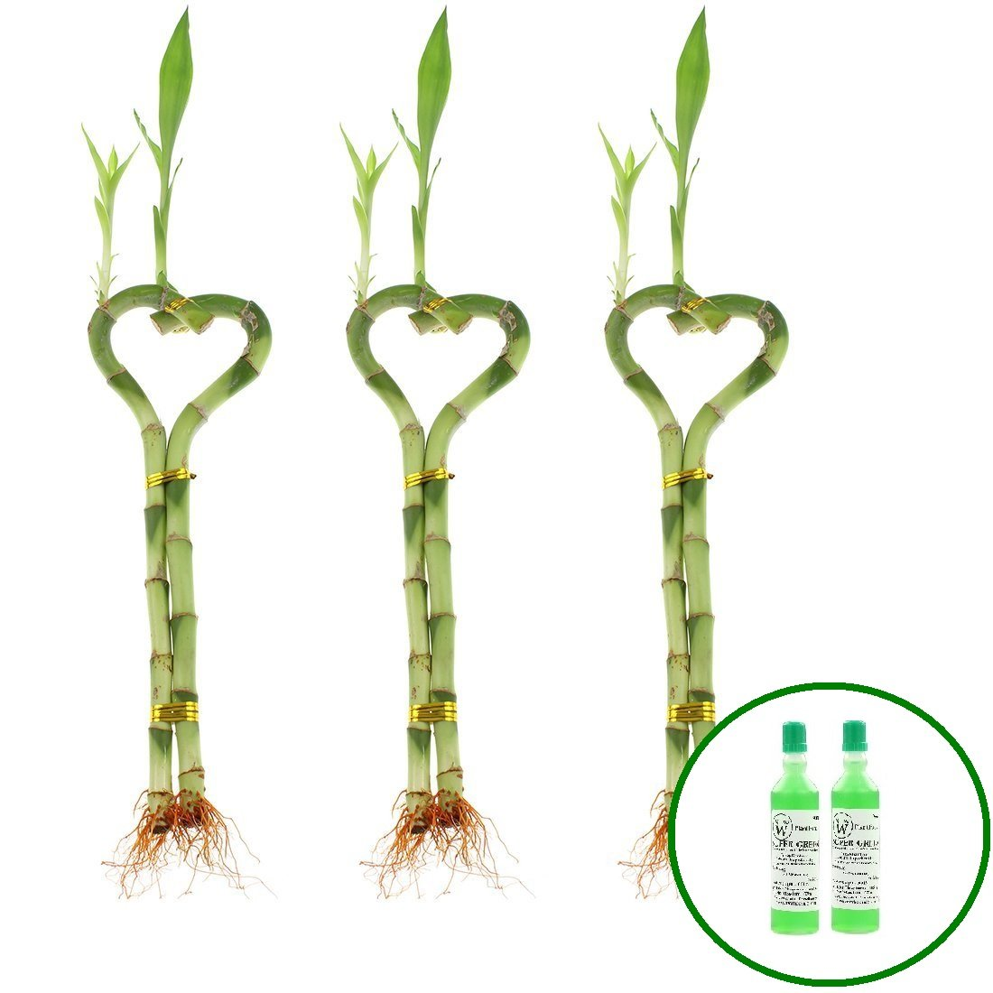 NW Wholesaler - 8'' Heart Shaped Lucky Bamboo Arrangement with 2 Free Bottles of Bamboo Fertilizer (3) by NW Wholesaler