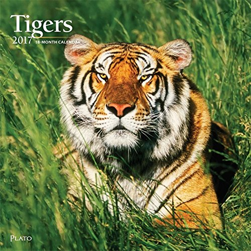 2017 Monthly Wall Calendar - Tigers