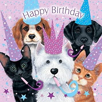 Assorted animals cats and dogs birthday card sue hall amazon assorted animals cats and dogs birthday card sue hall amazon kitchen home bookmarktalkfo
