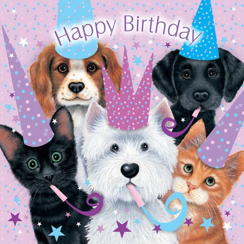 Assorted Animals Cats and Dogs Birthday Card Sue Hall Amazonco – Happy Birthday Cards with Dogs