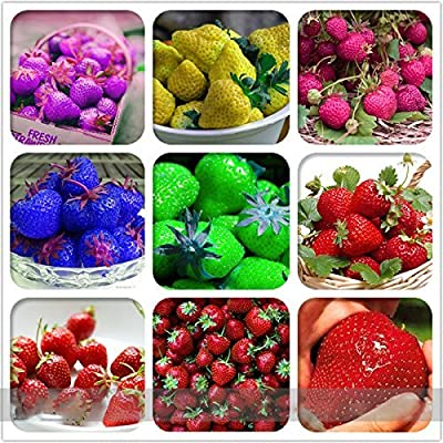 (Strawberry D900 *Ambizu*) 9 Packs Rare Hybrid Edible Purple Yellow Pink Blue Green Red Giant Strawberry Seeds, Professional Pack, 100 Seeds / Pack