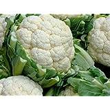 Blumenkohl - Snowball Y Improved - ca. 100 Samen