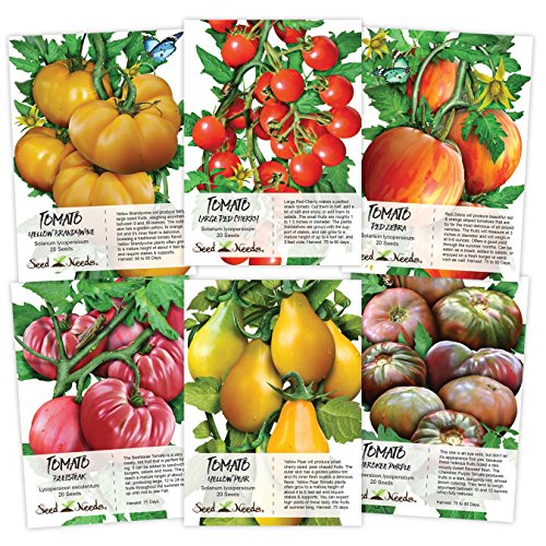 Seed Needs Multicolor Tomato Seed Packet Collection (6 Individual Packets) Non-GMO Seeds by