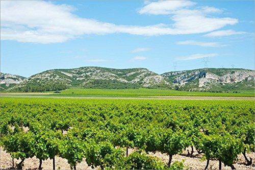 Vineyards with Hills in The Background, Alpilles, Route d'Orgon, Eyguieres, Bouches-Du-Rhone, Provence-Alpes-Cote d'Azur, France by Panoramic Images Laminated Art Print, 45 x 30 inches