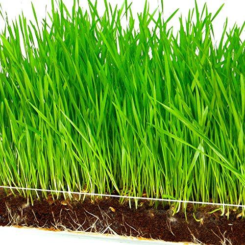 Best Organic Grow Bags - 9