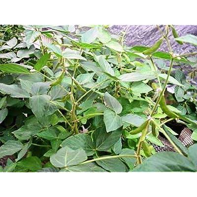 Soybean Seed : Garden & Outdoor