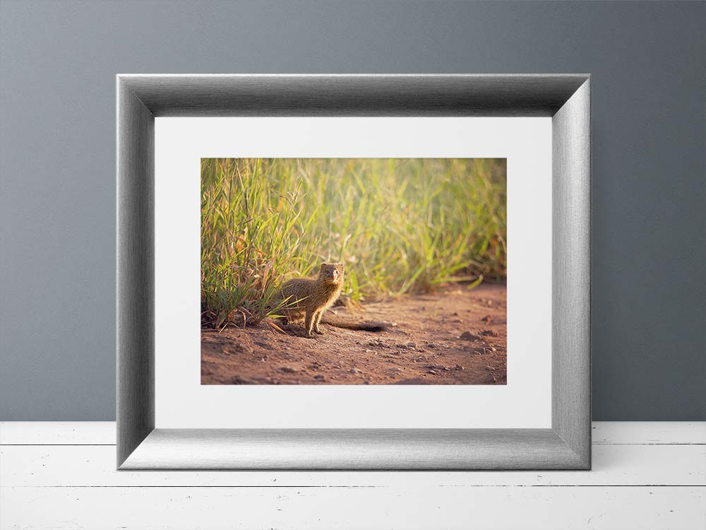 Mongoose - Wildlife Photograph Animal Picture Home Decor Wall Nature Print - Variety of Size Available by Whimsical Wild Artwork (Image #5)