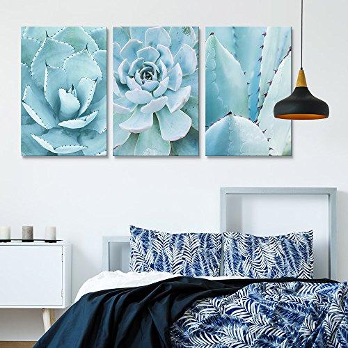 3 Panel Closeup of Blue Succulent Plants x 3 Panels