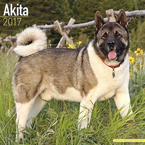 Akita Calendar 2017 - Dog Breed Calendar - Wall Calendar 2016-2017