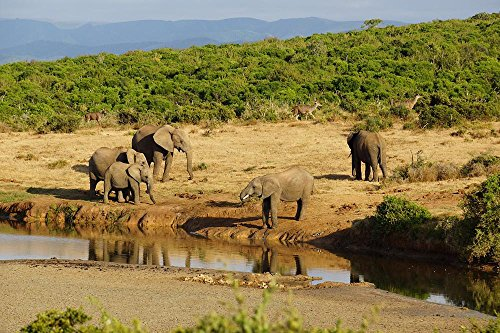 LAMINATED 36x24 inches POSTER: Elephant Water Hole Africa Sa