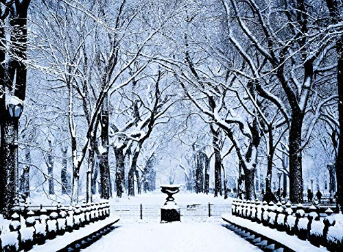 Central Park Trees in Snow, New York City Christmas Holiday Boxed Cards Set of 12 Season's Greetings Cards and 12 Envelopes. Made in ()