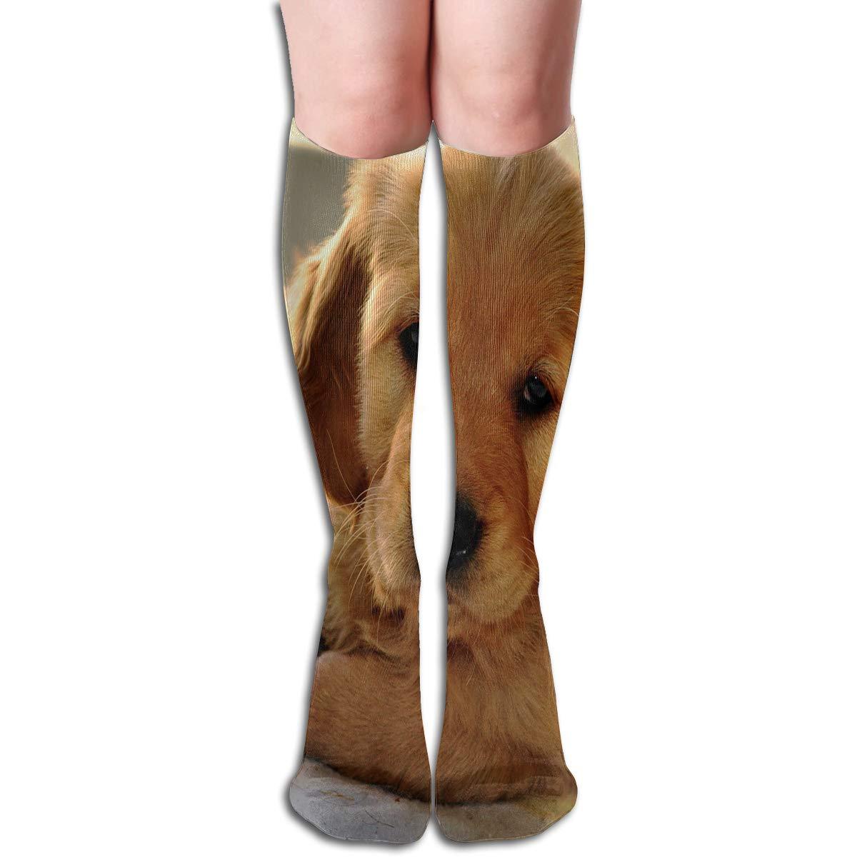 Women Socks Over Knee Golden Retriever Puppies Picture Winter Fabulous For Easter