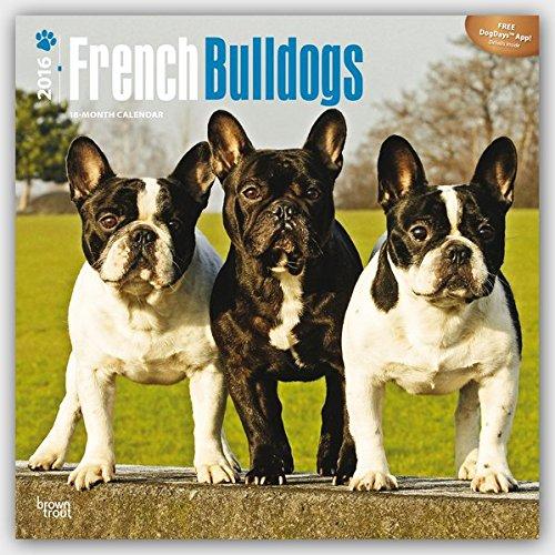 French Bulldogs 2016 - Französische Bulldoggen - 18-Monatskalender mit freier DogDays-App: Original BrownTrout-Kalender [Mehrsprachig] [Kalender] (Wall-Kalender)