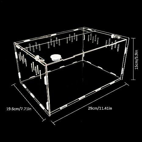 Amazon Com Loprchwise Transparent Acrylic Pet Reptile Box