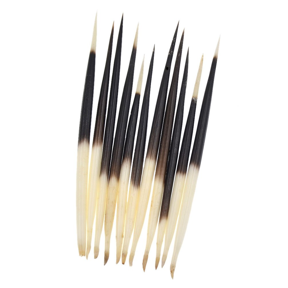 Porcupine Quills Hair Stick Indian Crafts Accessories Fishing Buoy DIY 6 7 10Pcs