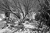 24 x 36 B&W Giclee Print A Portion The Lajitas Golf Resort Spa in Lajitas, an unincorporated Town at The spot That Separates Big Bend National Park Big Bend Ranch Stat 2014 Highsmith 41a