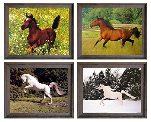 Framed Wall Decor Arabian Mare And White Horse Rearing Wild Animal Four 8x10 Set Barnwood Pictures Art Print Posters by Impact Posters Gallery