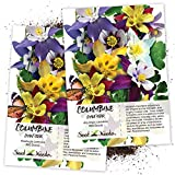 Seed Needs, Giant Star Columbine Mix (Aquilegia caerulea) Twin Pack of 500 Seeds Each