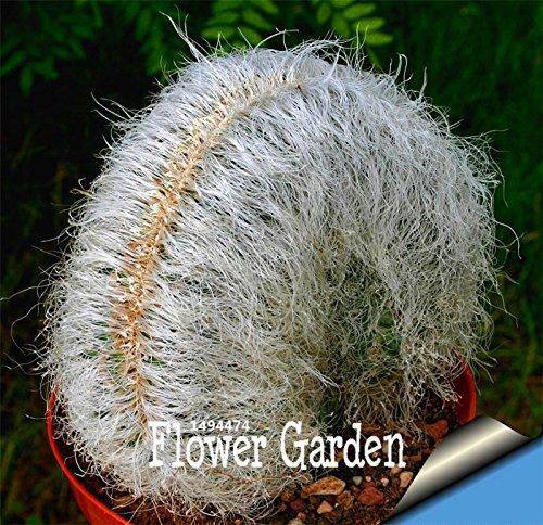 Big Sale!Cactus Flowers 100pcs/Bag Cactus plant seed Rare plant seeds Foliage magical garden & home Semillas Flora,#PBC46J