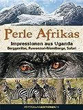 Perle Afrikas: Impressionen aus Uganda: Berggorillas, Ruwenzori-Mondberge, Safari