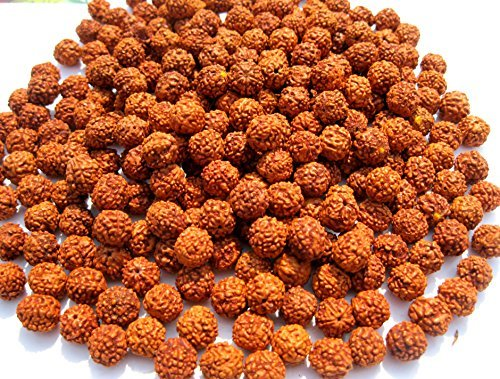Loose Seed Bead (Godblessmart-Lot of 1000 Rudraksh Seeds Loose Beads, Rudraksha Beads, 8mm)