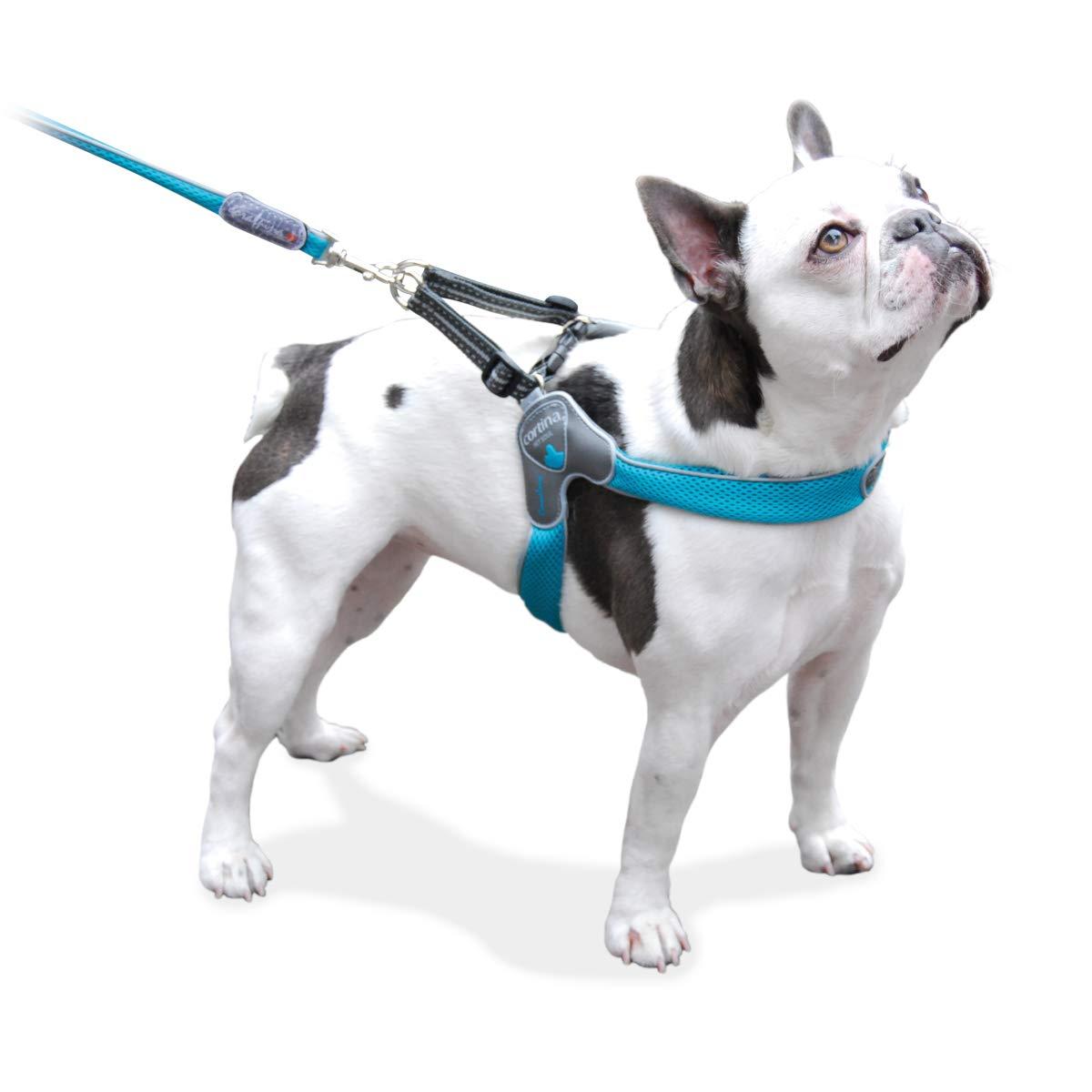 Coralpina Pettorina Dog /& Puppy Pettorina Design Italiano /& qualit/à Morbido Airmesh