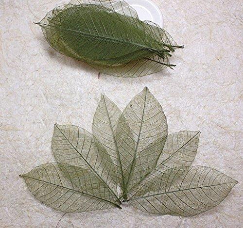 6 Arm Leaf - 8