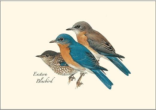 Bluebird note card greeting card bird stationary