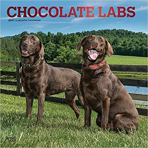 QUALITY 2019 CHOCOLATE LAB RETIEVER Wall Calendar-Best Holiday Gift -Great for mom, dad, sister, brother, grandparents, gra gay,PLANNER, CALENDAR PLANNER,CALENDAR WALL,POCKET, CALENDAR MONTHLY.
