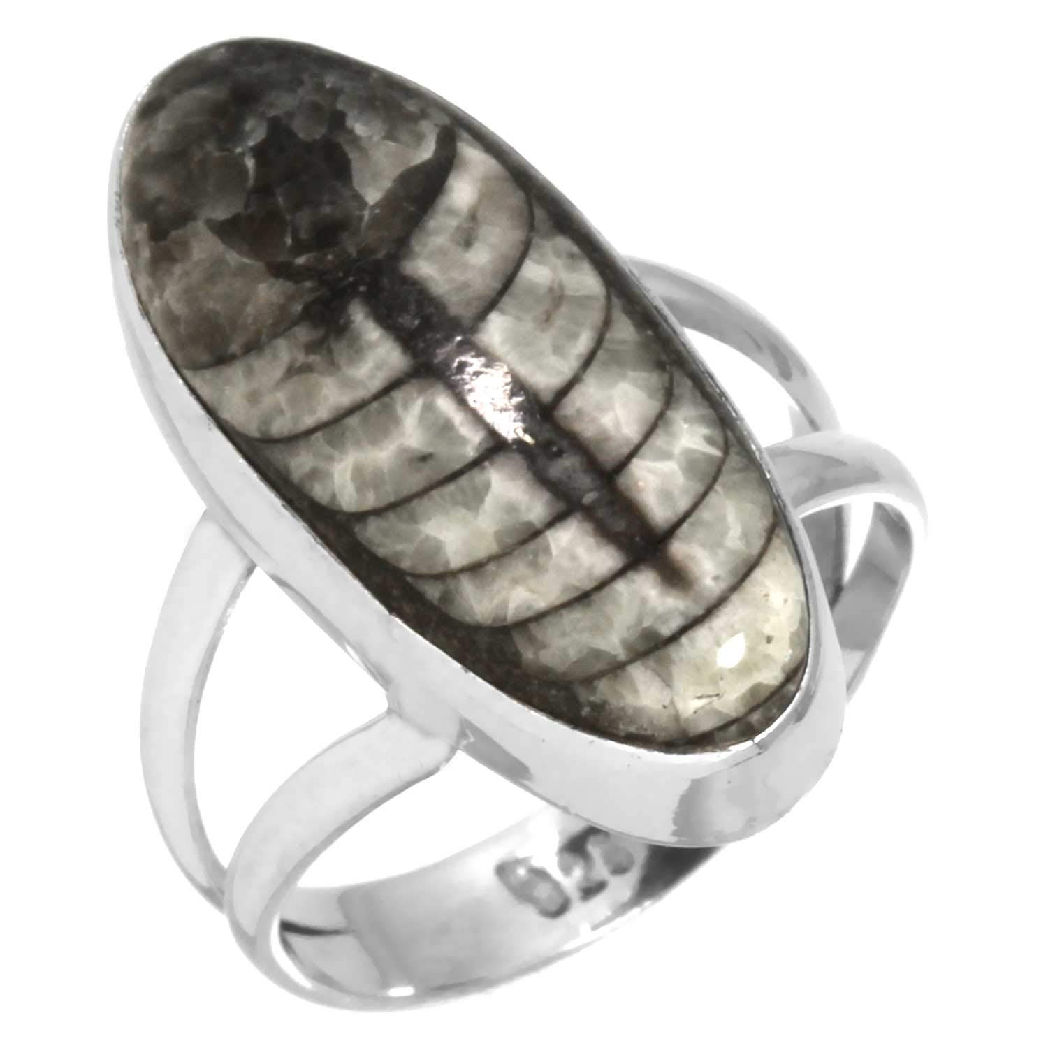 Natural Fossil Orthoceras Gemstone Ring Solid 925 Sterling Silver Collectible Jewelry Size 6
