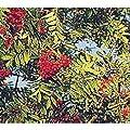 European Mountain Ash Rowan Fruit Tree with Berries Nice Tree Live Plant #BK05