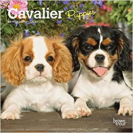 Cavalier King Charles Spaniel Puppies 2019 Mini Wall Calendar