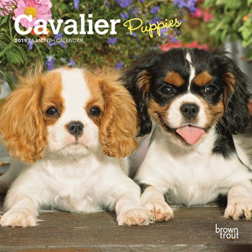 Cavalier King Charles Spaniel Puppies 2019 7 x 7 Inch Monthly Mini Wall Calendar, Animals Dog Breeds Puppies (Multilingual Edition)
