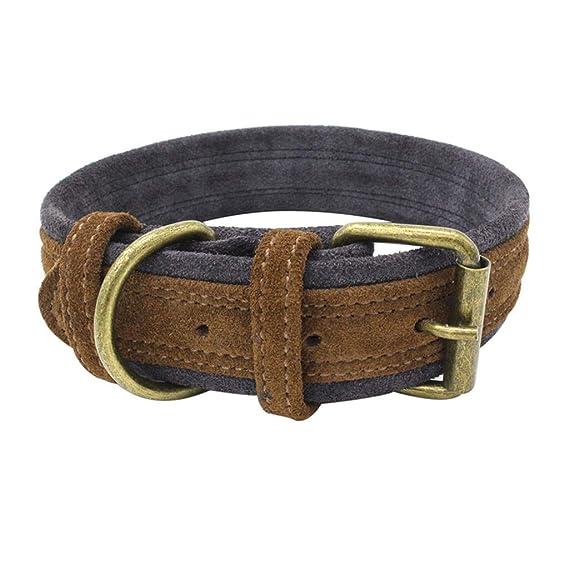 CAOQAO - Collar Ajustable para Perro, Cachorro y Cachorro con ...