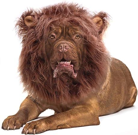 Onmygogo - Peluca de melena de león para perros con orejas, divertido disfraz de mascota para Halloween Navidad (tamaño L, café): Amazon.es: Hogar