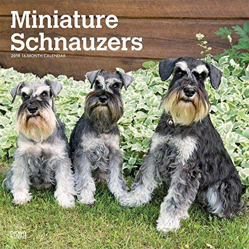 2019 Schnauzers Miniature Euro Wall Calendar, by BrownTrout