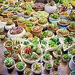 Augshy-24-Pack-Artificial-Succulent-Plants-Unpotted-Mini-Fake-Succulents-Plant-for-Lotus-Landscape-Decorative-Garden-Arrangement-Decor