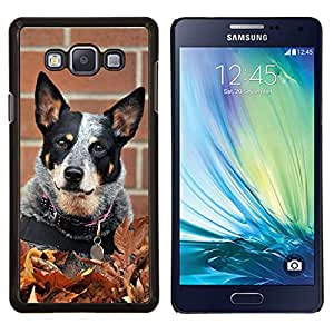 TECHCASE---Cubierta de la caja de protección para la piel dura ** Samsung Galaxy A7 ( A7000 ) ** --Rata Terrier Toy Fox Pequeño perro de la caída del otoño