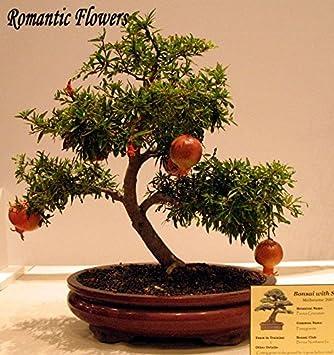 20pcs / bag semillas de granada Mini Bonsai Semillas de Plantas deliciosa de la fruta grande y dulces para jardín Mira las Plantas del brote del 95%: ...