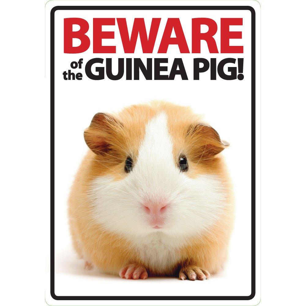 Magnet & Steel Cuidado de la Guinea Pig A5señal Magnet & Steel Ltd 2725