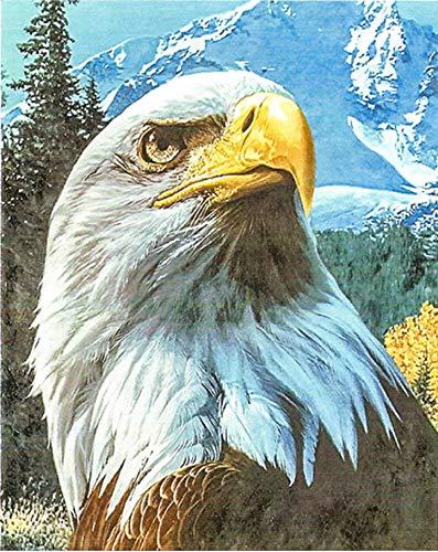 Christmas Paintings For Kids On Canvas.Amazon Com Tfcasz Eagle Digital Oil Painting Canvas