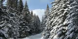 GladsBuy Snowy Pine 20' x 10' Computer Printed Photography Backdrop Snow Theme Background LMG-006