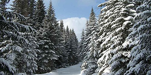 GladsBuy Snowy Pine 20' x 10' Computer Printed Photography Backdrop Snow Theme Background LMG-006 by GladsBuy